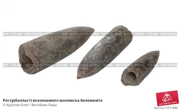 Ростр(балласт) ископаемого моллюска белемнита, фото № 117449, снято 15 ноября 2007 г. (c) Круглов Олег / Фотобанк Лори
