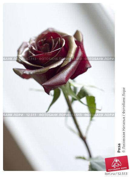 Роза, фото № 12513, снято 20 декабря 2005 г. (c) Лисовская Наталья / Фотобанк Лори