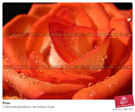Роза, фото № 145717, снято 27 ноября 2007 г. (c) Лысых Константин / Фотобанк Лори