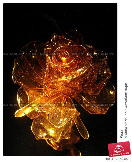 Роза, фото № 189889, снято 30 января 2008 г. (c) Anna Marklund / Фотобанк Лори