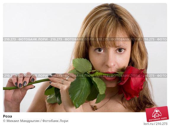Купить «Роза», фото № 210273, снято 19 февраля 2008 г. (c) Михаил Мандрыгин / Фотобанк Лори