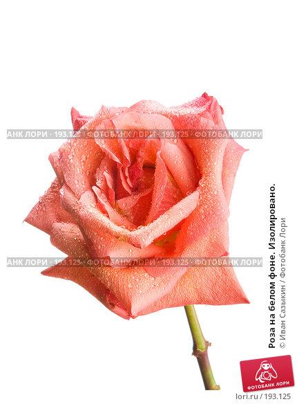 Роза на белом фоне. Изолировано., фото № 193125, снято 30 января 2008 г. (c) Иван Сазыкин / Фотобанк Лори