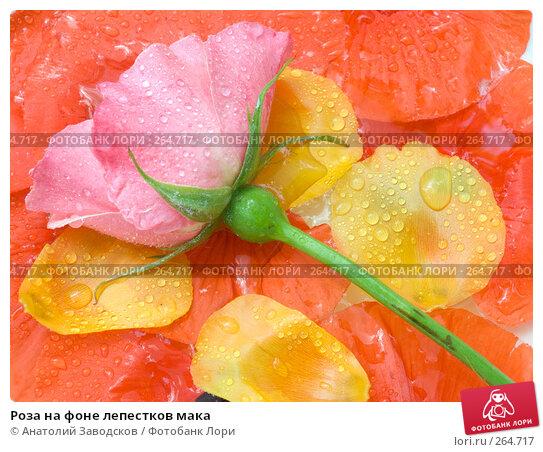 Купить «Роза на фоне лепестков мака», фото № 264717, снято 28 мая 2007 г. (c) Анатолий Заводсков / Фотобанк Лори