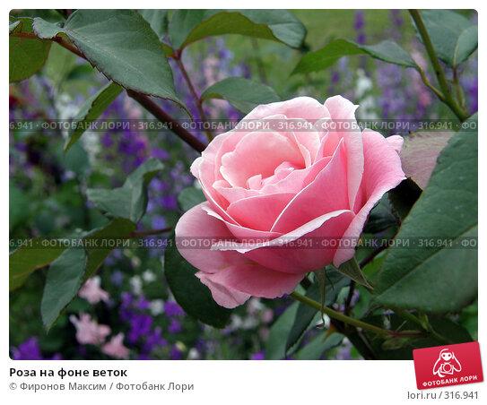Купить «Роза на фоне веток», фото № 316941, снято 8 июня 2008 г. (c) Фиронов Максим / Фотобанк Лори