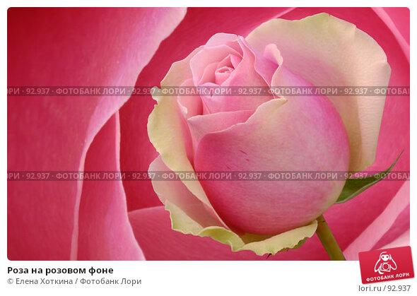 Роза на розовом фоне, фото № 92937, снято 27 июня 2017 г. (c) Елена Хоткина / Фотобанк Лори