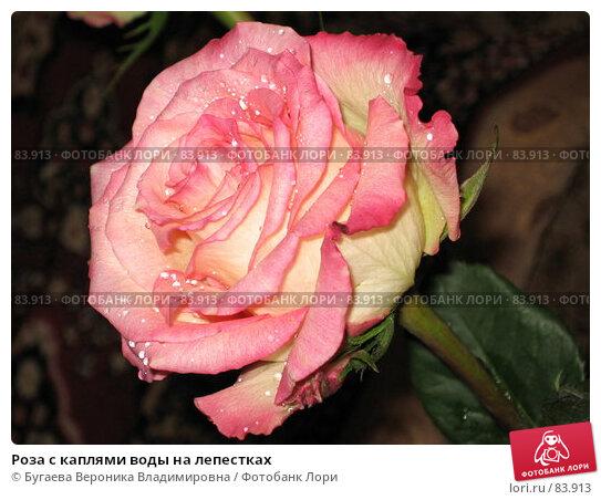 Роза с каплями воды на лепестках, фото № 83913, снято 7 октября 2006 г. (c) Бугаева Вероника Владимировна / Фотобанк Лори