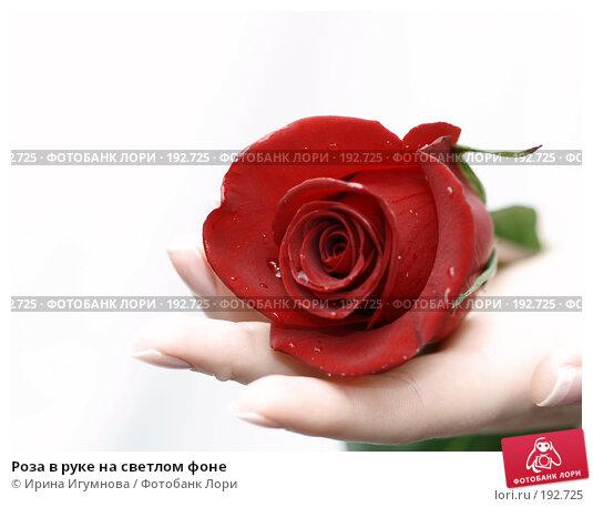 Роза в руке на светлом фоне, фото № 192725, снято 3 января 2008 г. (c) Ирина Игумнова / Фотобанк Лори