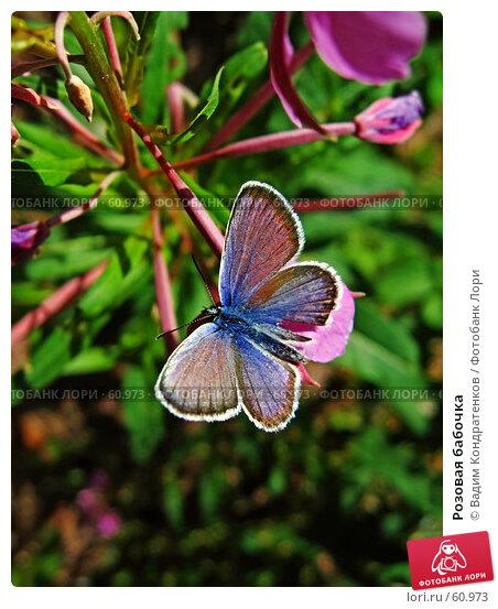 Розовая бабочка, фото № 60973, снято 8 декабря 2016 г. (c) Вадим Кондратенков / Фотобанк Лори