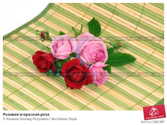 Купить «Розовая и красная роза», фото № 336397, снято 24 июня 2008 г. (c) Коннов Леонид Петрович / Фотобанк Лори