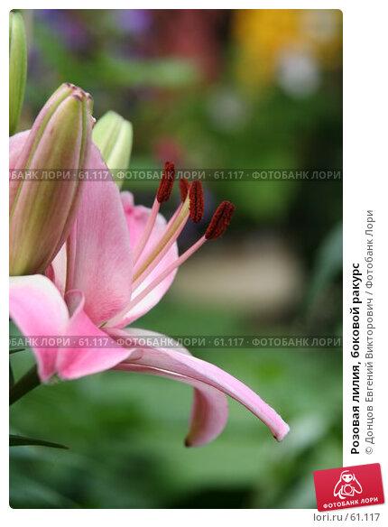 Розовая лилия, боковой ракурс, фото № 61117, снято 10 июля 2007 г. (c) Донцов Евгений Викторович / Фотобанк Лори