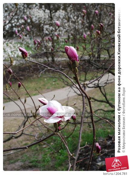 Розовая магнолия с бутоном на фоне дорожки.Киевский ботанический сад, фото № 204781, снято 12 апреля 2007 г. (c) Мирослава Безман / Фотобанк Лори