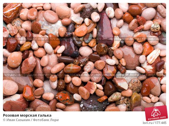 Розовая морская галька, фото № 177445, снято 9 ноября 2007 г. (c) Иван Сазыкин / Фотобанк Лори