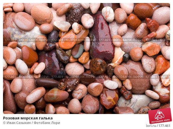 Розовая морская галька, фото № 177461, снято 9 ноября 2007 г. (c) Иван Сазыкин / Фотобанк Лори
