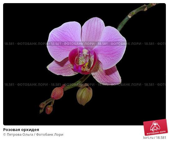 Купить «Розовая орхидея», фото № 18581, снято 26 февраля 2006 г. (c) Петрова Ольга / Фотобанк Лори