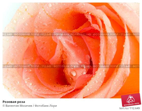Розовая роза, фото № 112649, снято 10 февраля 2007 г. (c) Валентин Мосичев / Фотобанк Лори