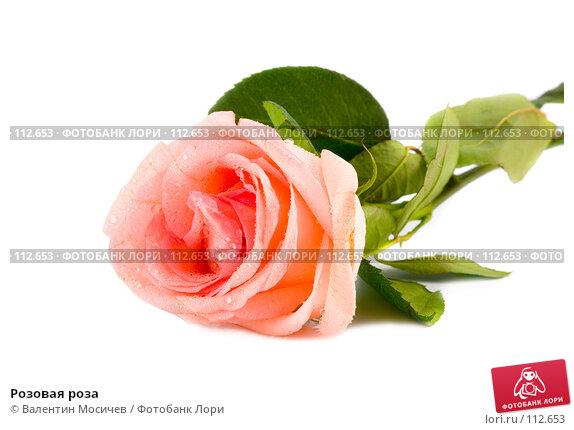 Розовая роза, фото № 112653, снято 10 февраля 2007 г. (c) Валентин Мосичев / Фотобанк Лори