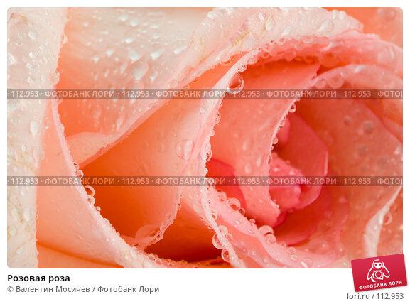 Розовая роза, фото № 112953, снято 16 февраля 2007 г. (c) Валентин Мосичев / Фотобанк Лори