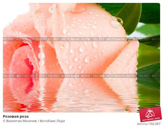 Розовая роза, фото № 192057, снято 16 февраля 2007 г. (c) Валентин Мосичев / Фотобанк Лори
