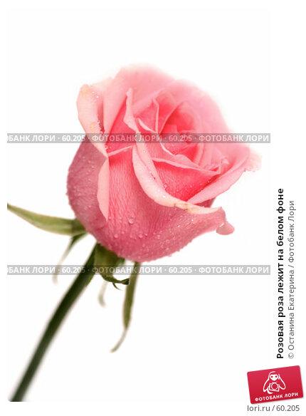Розовая роза лежит на белом фоне, фото № 60205, снято 19 февраля 2007 г. (c) Останина Екатерина / Фотобанк Лори