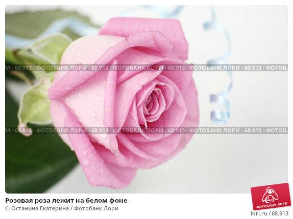 Розовая роза лежит на белом фоне, фото № 68913, снято 29 марта 2007 г. (c) Останина Екатерина / Фотобанк Лори