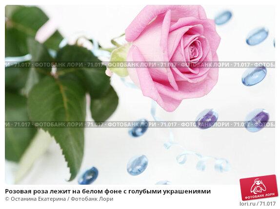 Розовая роза лежит на белом фоне с голубыми украшениями, фото № 71017, снято 29 марта 2007 г. (c) Останина Екатерина / Фотобанк Лори