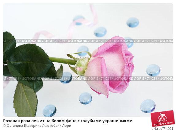 Розовая роза лежит на белом фоне с голубыми украшениями, фото № 71021, снято 29 марта 2007 г. (c) Останина Екатерина / Фотобанк Лори
