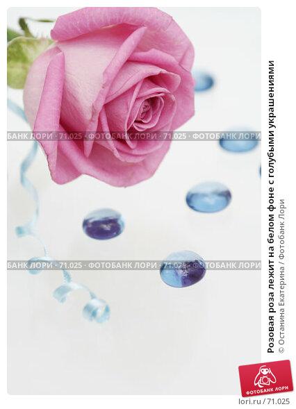 Розовая роза лежит на белом фоне с голубыми украшениями, фото № 71025, снято 29 марта 2007 г. (c) Останина Екатерина / Фотобанк Лори