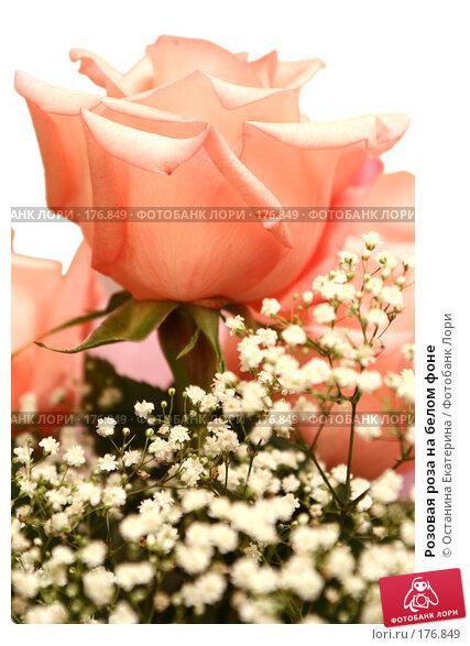 Розовая роза на белом фоне, фото № 176849, снято 12 июля 2007 г. (c) Останина Екатерина / Фотобанк Лори