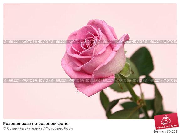 Розовая роза на розовом фоне, фото № 60221, снято 29 марта 2007 г. (c) Останина Екатерина / Фотобанк Лори