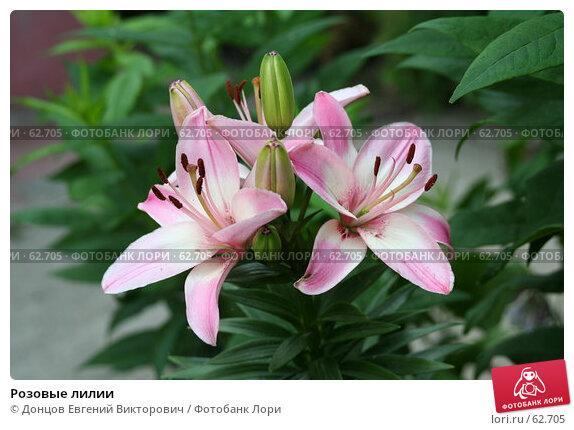 Розовые лилии, фото № 62705, снято 11 июля 2007 г. (c) Донцов Евгений Викторович / Фотобанк Лори