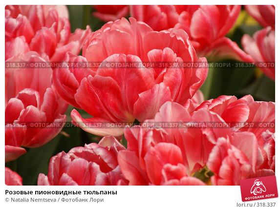 Розовые пионовидные тюльпаны, эксклюзивное фото № 318337, снято 8 апреля 2008 г. (c) Natalia Nemtseva / Фотобанк Лори