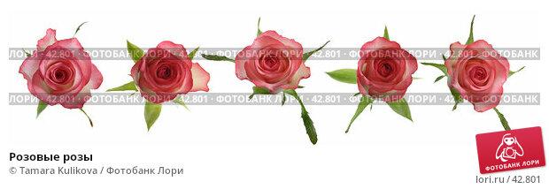 Розовые розы, фото № 42801, снято 22 января 2017 г. (c) Tamara Kulikova / Фотобанк Лори
