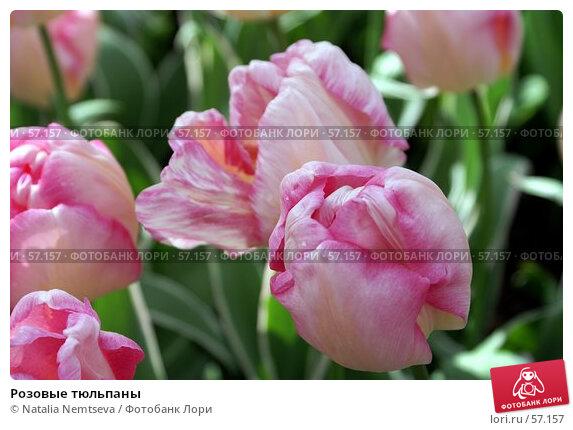 Розовые тюльпаны, эксклюзивное фото № 57157, снято 7 апреля 2007 г. (c) Natalia Nemtseva / Фотобанк Лори