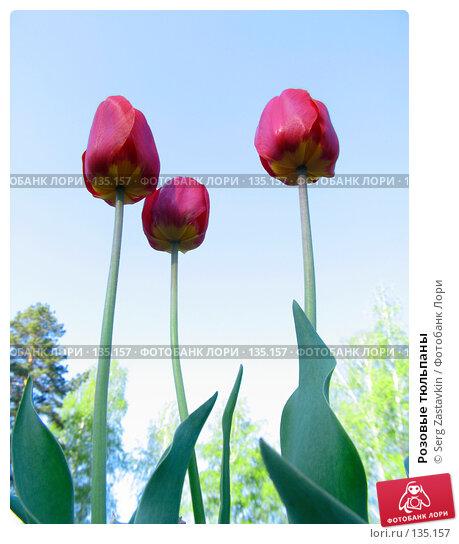 Купить «Розовые тюльпаны», фото № 135157, снято 20 мая 2005 г. (c) Serg Zastavkin / Фотобанк Лори