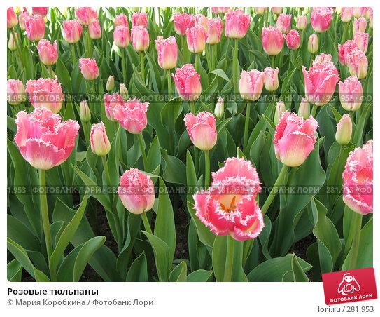 Розовые тюльпаны, фото № 281953, снято 27 апреля 2008 г. (c) Мария Коробкина / Фотобанк Лори