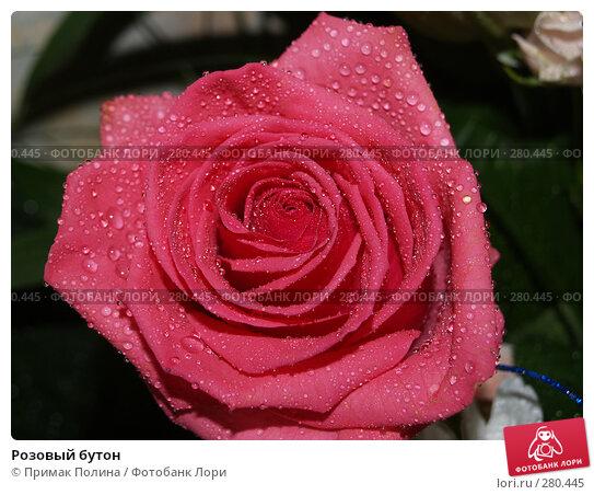 Розовый бутон, фото № 280445, снято 8 августа 2007 г. (c) Примак Полина / Фотобанк Лори