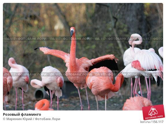 Розовый фламинго, фото № 156117, снято 10 декабря 2007 г. (c) Марюнин Юрий / Фотобанк Лори
