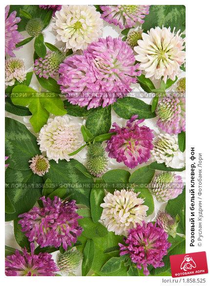 Купить «Розовый и белый клевер, фон», фото № 1858525, снято 19 июля 2010 г. (c) Руслан Кудрин / Фотобанк Лори