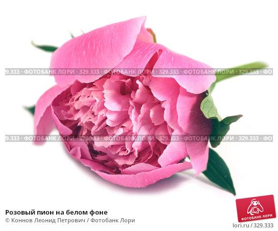 Купить «Розовый пион на белом фоне», фото № 329333, снято 20 июня 2008 г. (c) Коннов Леонид Петрович / Фотобанк Лори