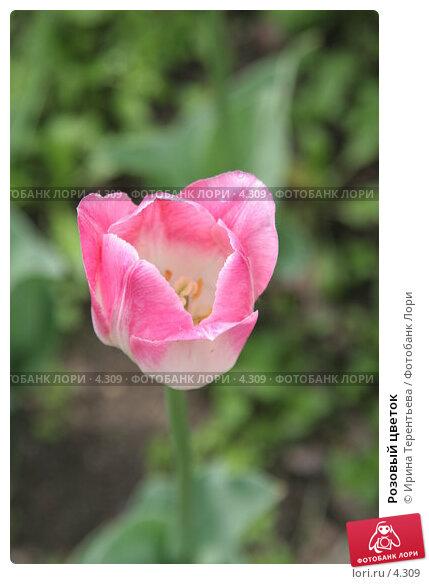 Розовый цветок , эксклюзивное фото № 4309, снято 29 мая 2006 г. (c) Ирина Терентьева / Фотобанк Лори