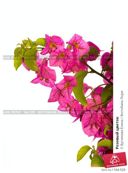Купить «Розовый цветок», фото № 164529, снято 28 августа 2007 г. (c) Бутинова Елена / Фотобанк Лори