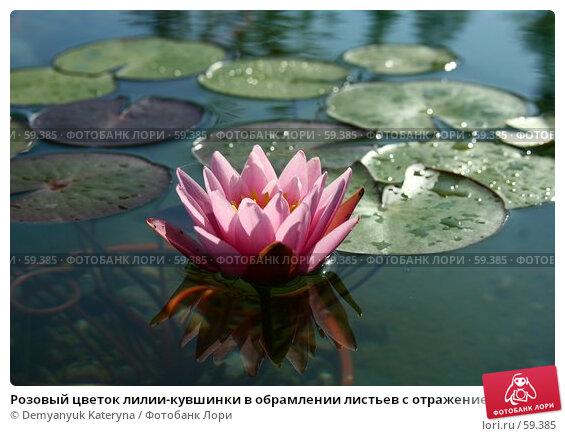 Розовый цветок лилии-кувшинки в обрамлении листьев с отражением в воде, фото № 59385, снято 7 июля 2007 г. (c) Demyanyuk Kateryna / Фотобанк Лори