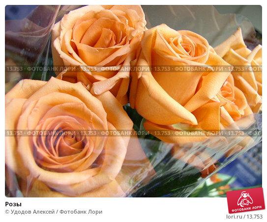 Розы, фото № 13753, снято 24 ноября 2006 г. (c) Удодов Алексей / Фотобанк Лори
