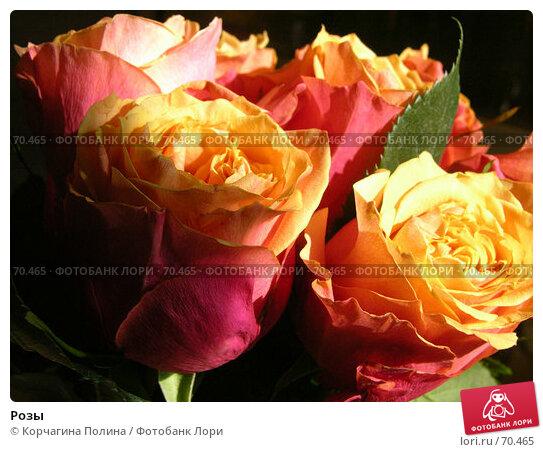 Купить «Розы», фото № 70465, снято 9 апреля 2004 г. (c) Корчагина Полина / Фотобанк Лори