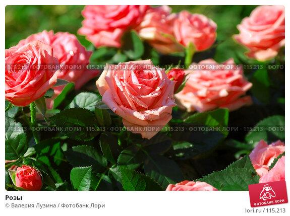 Розы, фото № 115213, снято 18 августа 2007 г. (c) Валерия Потапова / Фотобанк Лори