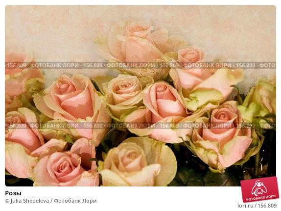 Розы, фото № 156809, снято 4 декабря 2007 г. (c) Julia Shepeleva / Фотобанк Лори