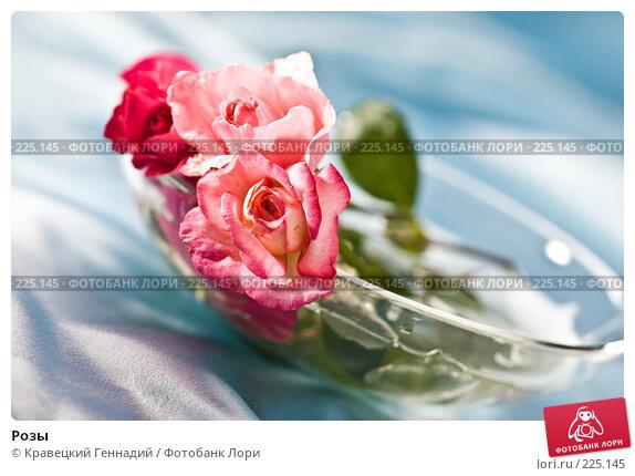 Розы, фото № 225145, снято 3 августа 2005 г. (c) Кравецкий Геннадий / Фотобанк Лори
