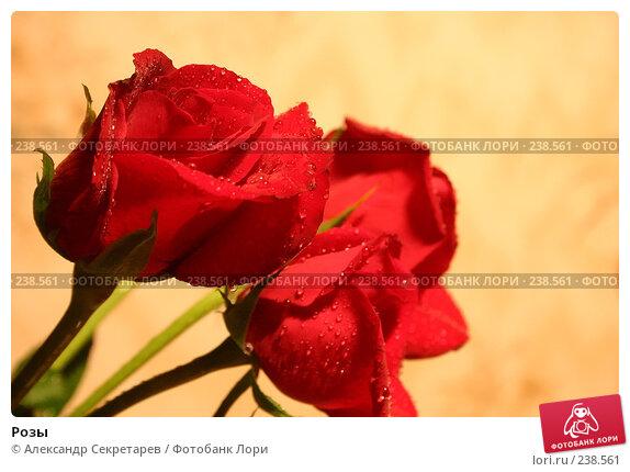 Купить «Розы», фото № 238561, снято 20 марта 2018 г. (c) Александр Секретарев / Фотобанк Лори