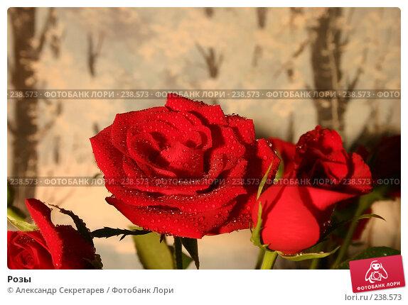 Розы, фото № 238573, снято 20 июля 2017 г. (c) Александр Секретарев / Фотобанк Лори
