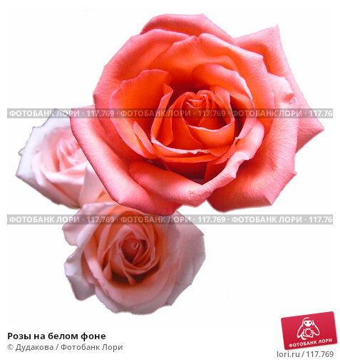 Розы на белом фоне, фото № 117769, снято 25 октября 2005 г. (c) Дудакова / Фотобанк Лори